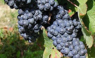 Festival Víno z blízka nabídne 250 vzorků vín z 25 jihomoravských vinařství