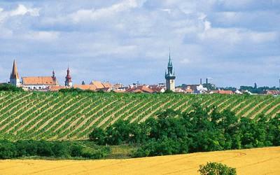 VOC Znojmo má třiadvacet nových vín. A už čtyři do Královské řady