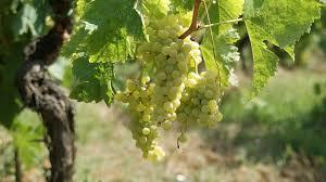 Co je to víno s přívlastkem? Víte to?