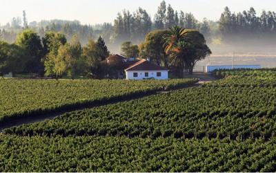 Test: Vína ročníku 2015 z celého světa