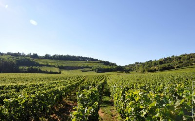 Ceny burgundských vín – jen cesta vzhůru