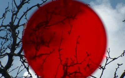 Amazon v Japonsku zkouší službu s on-line sommeliery