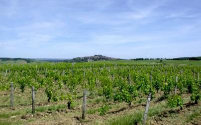 Vznik druhého největšího tuzemského producenta vína