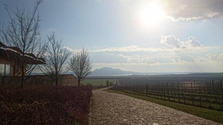 Morava 2016 – zpráva o stavu vína a vinic