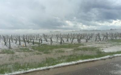 Černé květnové úterý v Chablis – kroupy pustošily vinice