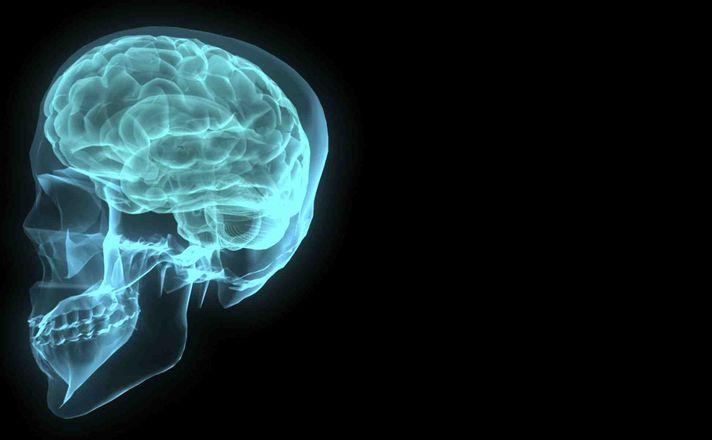 Pití vína zaměstnává mozek více než jakákoli jiná činnost