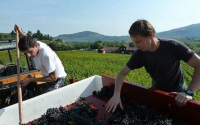 TOP 5 chyb které dělají moravská vinařství v prodeji