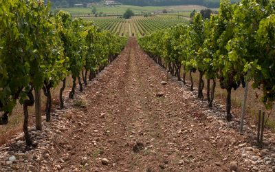 Pálavské vinobraní získá originální kroj