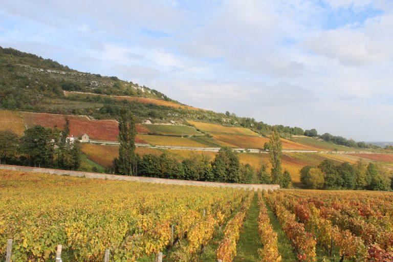 Užijte si gastrotoulky za dobrým vínem i historií na Pálavě
