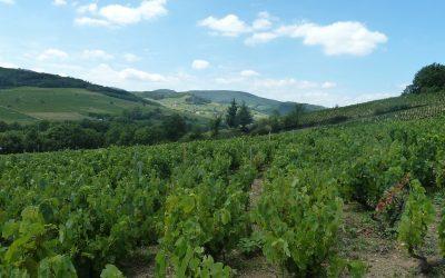 Moravské víno chutnalo i vévodkyni Camille