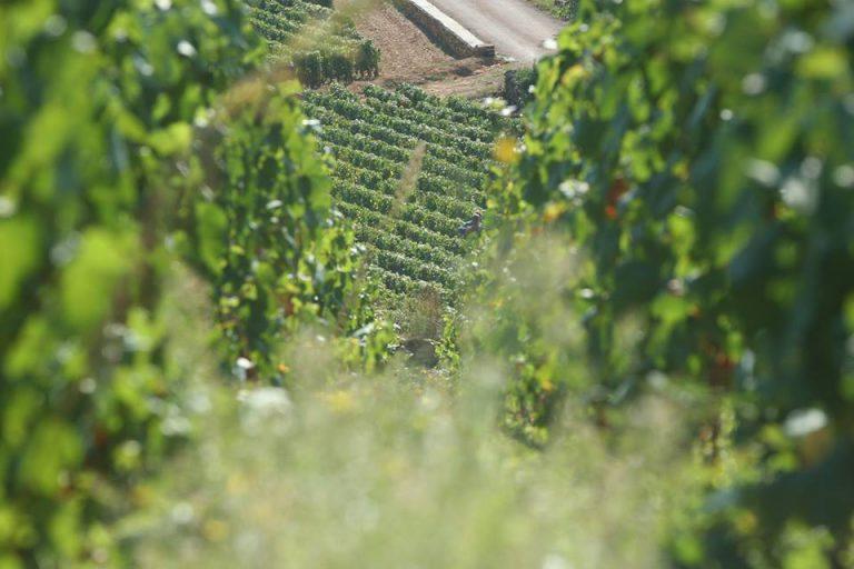 Chardonnay: Chile versus Francie