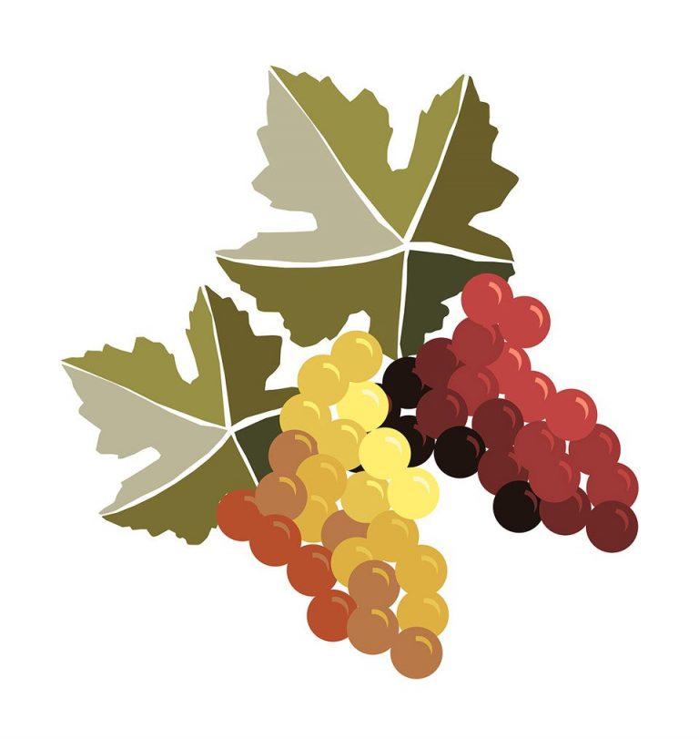 TA-archiv představil vína Weingut Schweiger z rakouského Kamptalu