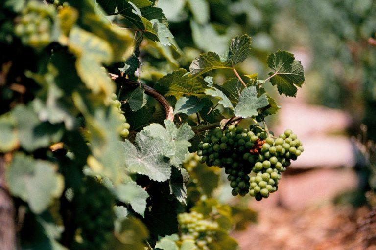 Galerie rulandských vín 2018 – informace pro vinaře