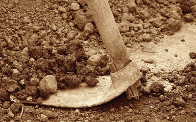 Vinaři odhalili u vinice pamětní desku a po dvou letech vykopali Modrý portugal
