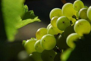 Ekologické vinařství Víno Marcinčák získalo v USA cenu za bio víno Pálava 2017