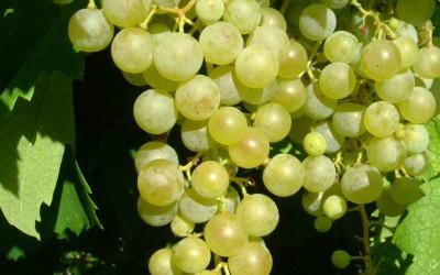 Toskánsko na víně…a na kole  I.