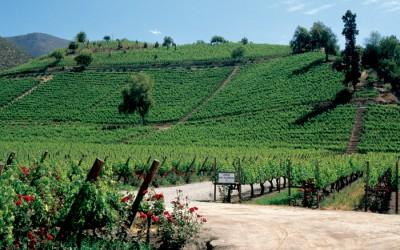 Toskánsko na víně…a na kole IV.